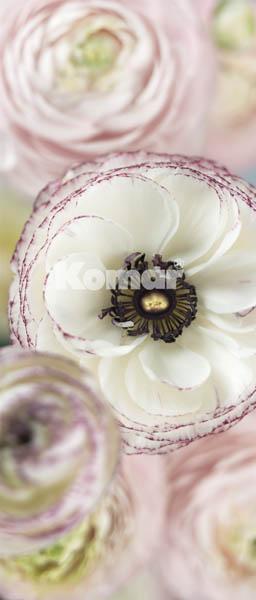 DAYDREAM, weiß rosa Blüten laden zum Träumen - bei Klick zurück zur Motivübersicht