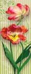 Fototapete Swing, schwingende Tulpenblüten