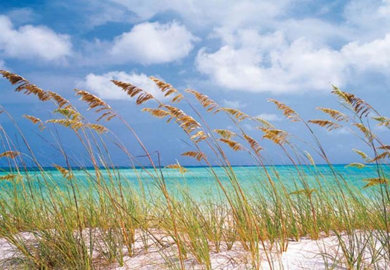 OCEAN BREEZE, Dünen am Strand - bei Klick zurück zur Motivübersicht
