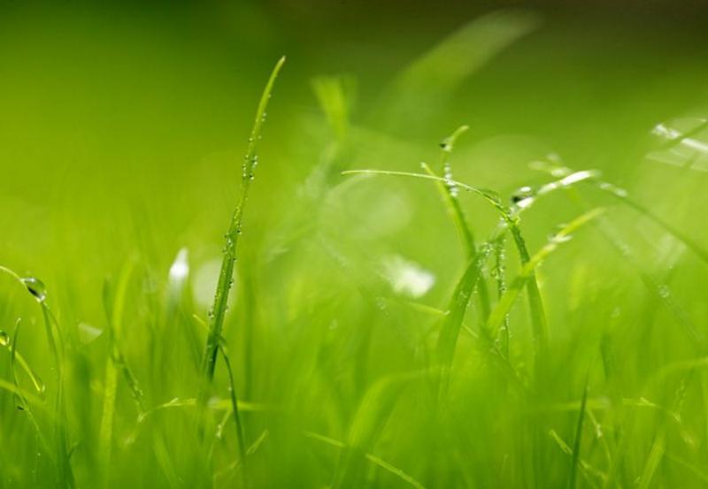 Green, Wiese im Morgentau - bei Klick zurück zur Motivübersicht
