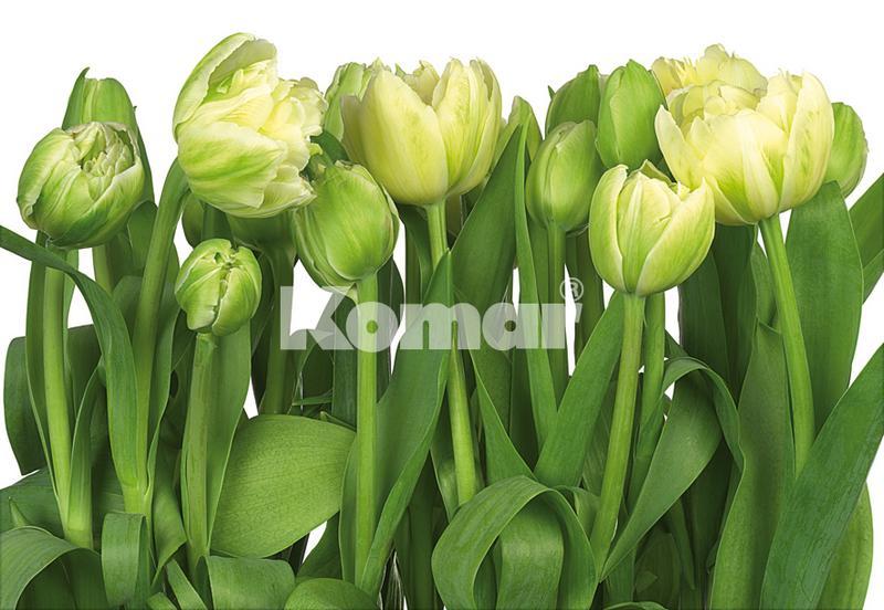 Tulips, weiße Tulpen mit grün, erfrischende Fototapete