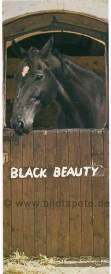 Black Beauty, Der schwarze Hengst - bei Klick zurück zur Motivübersicht