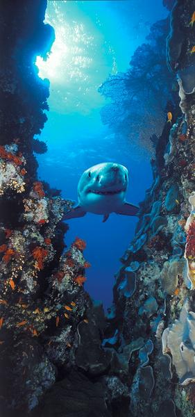 Hai, Gigant der Meere - bei Klick zurück zur Motivübersicht