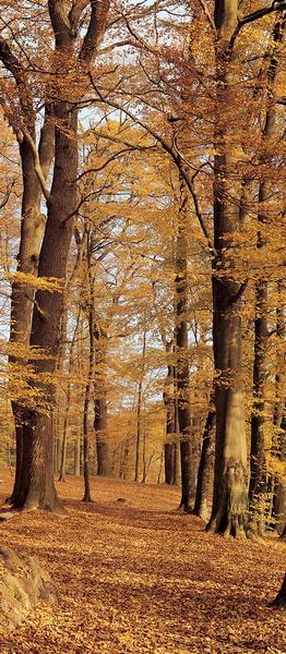 Herbstwald, herbstliche Impressionen - bei Klick zurück zur Motivübersicht