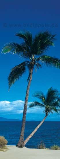 Palmen, Inseltraum - bei Klick zurück zur Motivübersicht