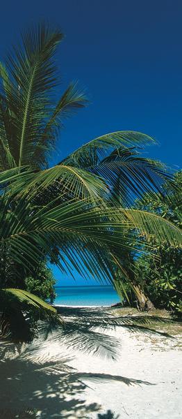 Palmenstrand, Urlaubsfeeling - bei Klick zurück zur Motivübersicht