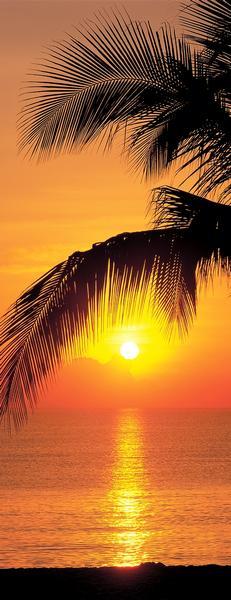 goldener Sonnenuntergang mit Palmen, Blick aufs Meer - bei Klick zurück zur Motivübersicht