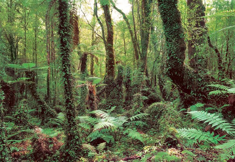 Tropenwald, gruener Farn - bei Klick zurück zur Motivübersicht