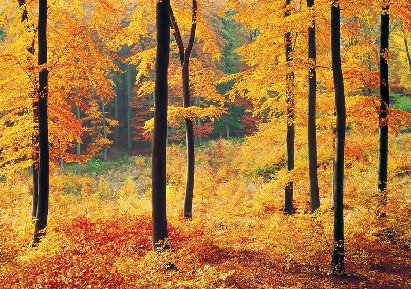 Waldlichtung, herbstliches Flair - bei Klick zurück zur Motivübersicht