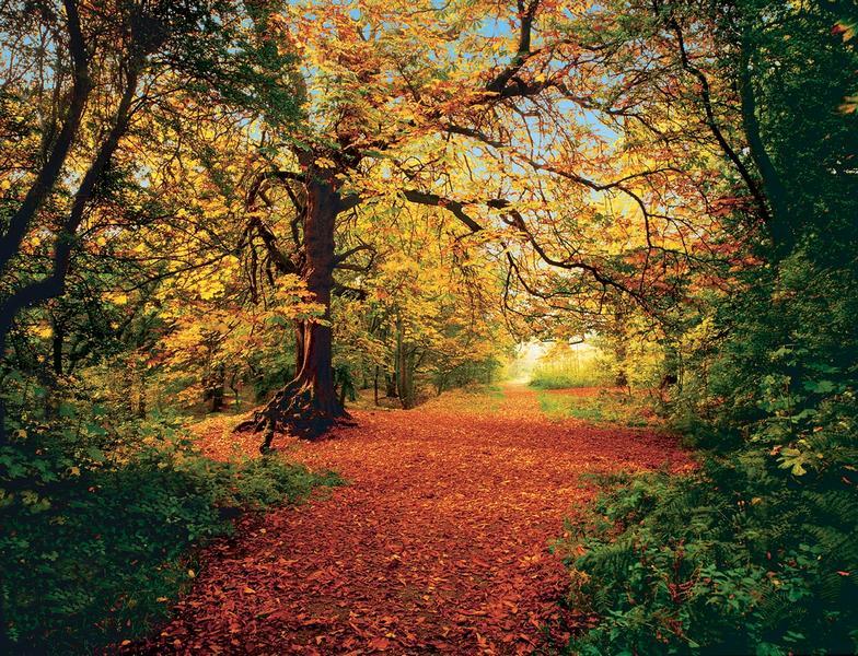 Herbstwald, die bunte Jahreszeit - bei Klick zurück zur Motivübersicht