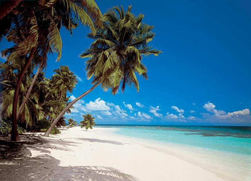 Fototapete tropen  Fototapeten Martinique ab EUR 15,- - weisser Strand im Indischen ...