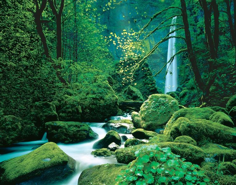 Elfenwald, Zauber der Natur - bei Klick zurück zur Motivübersicht