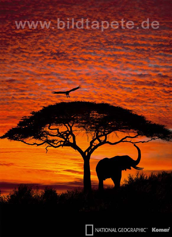 AFRICAN SUNSET - wilde Silhouetten vor leuchtendem Himmel Afrikas - bei Klick zurück zur Motivübersicht