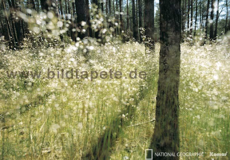 SPARKLING LIGHT - Lichtspiel des Waldes - bei Klick zurück zur Motivübersicht