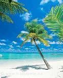 Fototapete Karibik - bei Klick Artikelbeschreibung