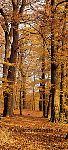 Türtapete Herbstwald - bei Klick Artikelbeschreibung