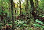 Fototapete Tropenwald - bei Klick Artikelbeschreibung