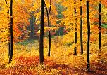 Fototapete Waldlichtung - bei Klick Artikelbeschreibung