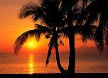 Fototapete Palmen im Sonnenuntergang - bei Klick Artikelbeschreibung