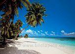 Fototapete Martinique - bei Klick Artikelbeschreibung