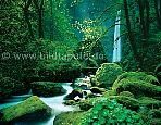 Fototapete Elfenwald - bei Klick Artikelbeschreibung