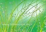 Fototapete AQUA, H²O, grüne Unterwasserwelt - bei Klick zur Artikelbeschreibung