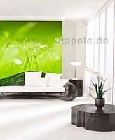 Green im Wohnbereich - bei Klick vergrößerte Darstellung