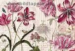 Motivtapete MERIAN - Blüten und Schmetterlinge Surinams - bei Klick Artikelbeschreibung