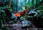 Fototapete MYSTIC, Feuer im Regenwald Neuseelands Abel Tasman Nationalpark - bei Klick Artikelbeschreibung