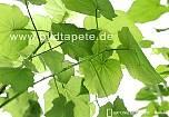 Fototapete OXYGEN, Photosynthese bildet die Grundlage für das Leben auf der Erde - bei Klick Artikelbeschreibung