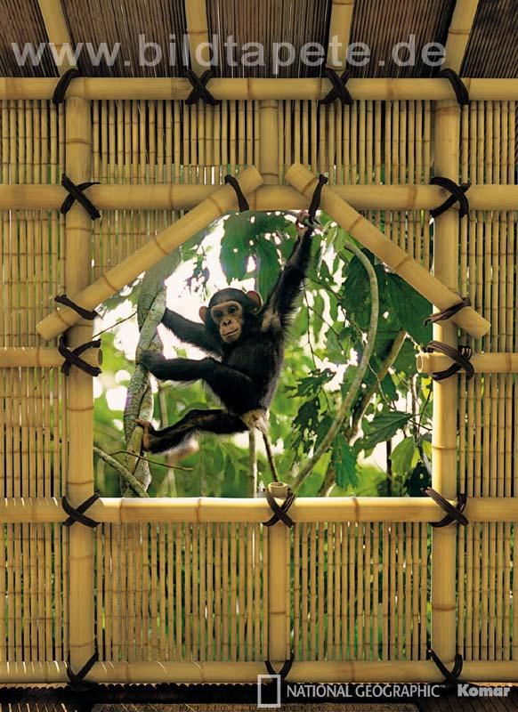 TREEHOUSE, eine Hommage an die Anthropologin Jane Goodall - bei Klick zurück zur Motivübersicht